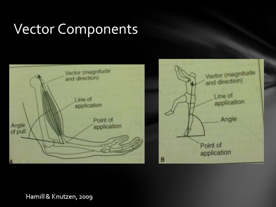 Vector Components Hamill & Knutzen, 2009
