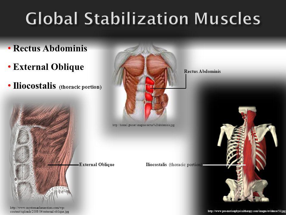 http://home1.gte.net/imagine/rectus%20abdominis.jpg Rectus Abdominis External Oblique Iliocostalis (thoracic portion) http://www.mystomachexercises.co