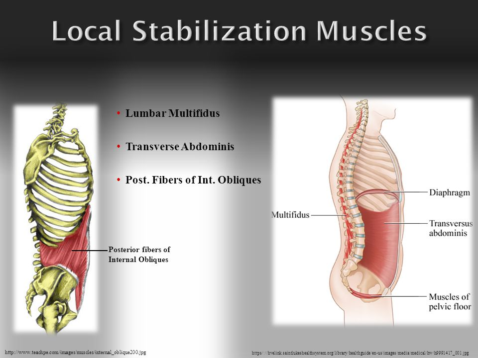 Direct attachment to lumbar vertebrae Control lumbar segments Dynamic stability of the spine Intra-abdominal pressure Local Stabilization Muscles include:  Lumbar Multifidus  Transverse Abdominis  Posterior Fibers of Internal Oblique