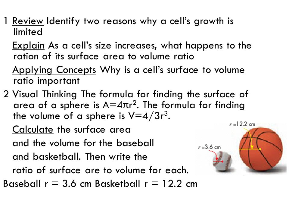1 Review Identify two reasons why a cell's growth is limited Explain As a cell's size increases, what happens to the ration of its surface area to vol