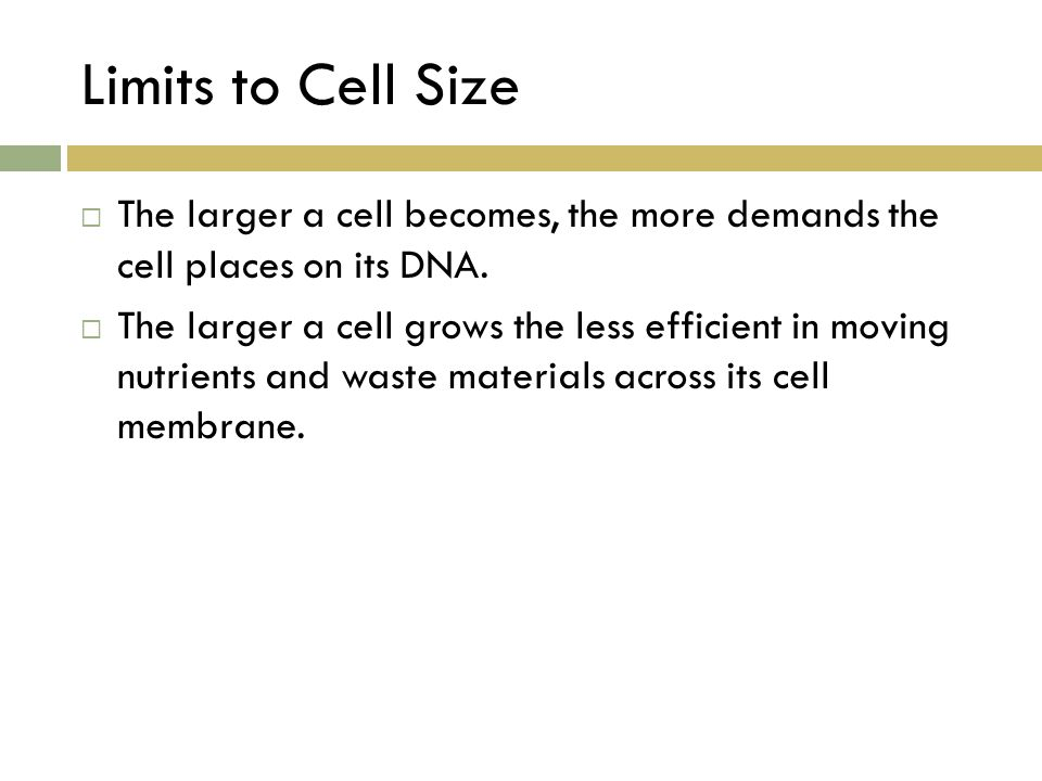 Limits to Cell Size  The larger a cell becomes, the more demands the cell places on its DNA.  The larger a cell grows the less efficient in moving n