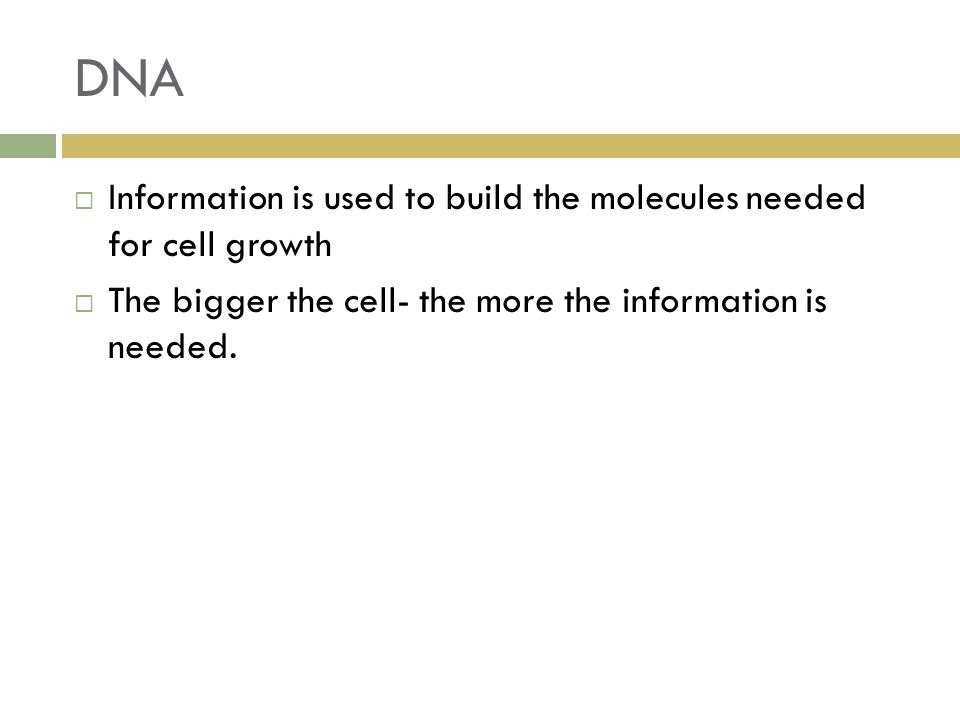 DNA  Information is used to build the molecules needed for cell growth  The bigger the cell- the more the information is needed.