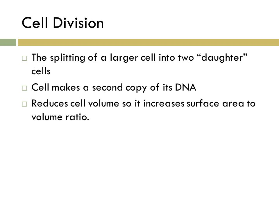 "Cell Division  The splitting of a larger cell into two ""daughter"" cells  Cell makes a second copy of its DNA  Reduces cell volume so it increases s"