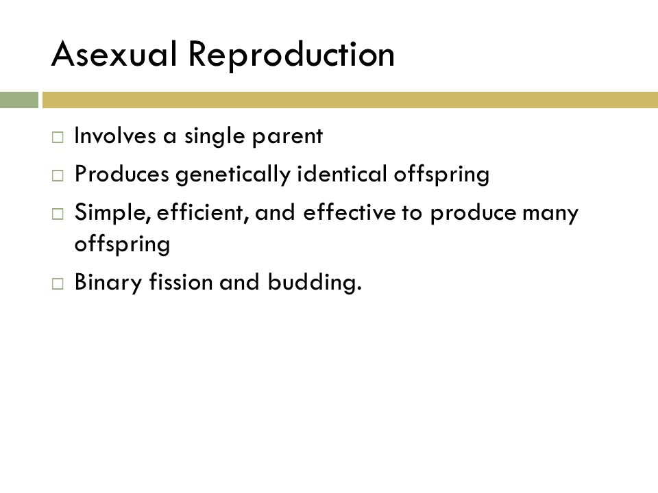 Asexual Reproduction  Involves a single parent  Produces genetically identical offspring  Simple, efficient, and effective to produce many offsprin