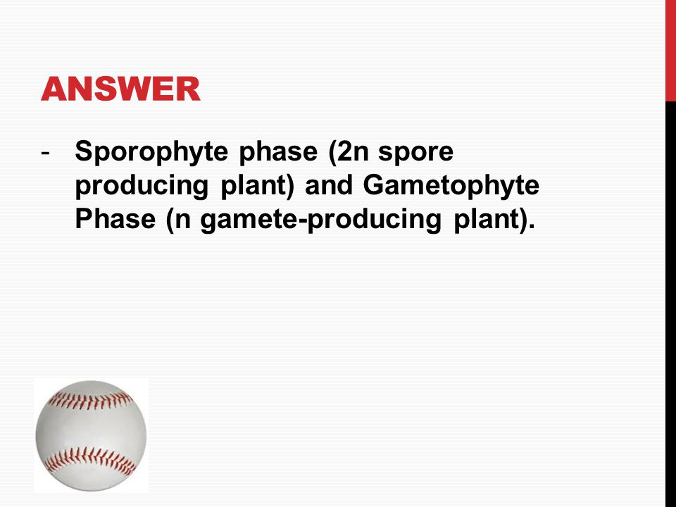 ANSWER -Sporophyte phase (2n spore producing plant) and Gametophyte Phase (n gamete-producing plant). HOME