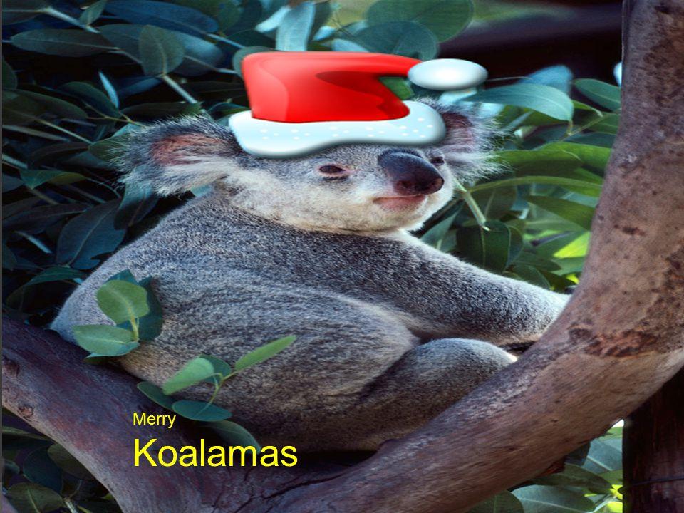 Merry Koalamas