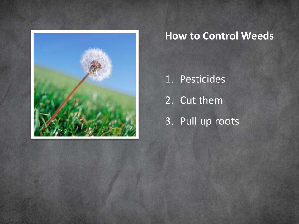 How to Control Weeds 1.Pesticides 2.Cut them 3.Pull up roots