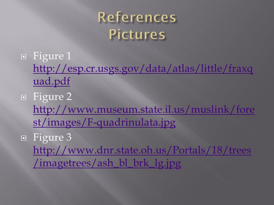 Figure 1 http://esp.cr.usgs.gov/data/atlas/little/fraxq uad.pdf http://esp.cr.usgs.gov/data/atlas/little/fraxq uad.pdf  Figure 2 http://www.museum.state.il.us/muslink/fore st/images/F-quadrinulata.jpg http://www.museum.state.il.us/muslink/fore st/images/F-quadrinulata.jpg  Figure 3 http://www.dnr.state.oh.us/Portals/18/trees /imagetrees/ash_bl_brk_lg.jpg http://www.dnr.state.oh.us/Portals/18/trees /imagetrees/ash_bl_brk_lg.jpg