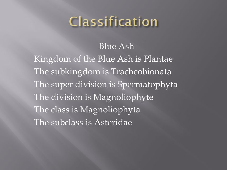 Blue Ash Kingdom of the Blue Ash is Plantae The subkingdom is Tracheobionata The super division is Spermatophyta The division is Magnoliophyte The class is Magnoliophyta The subclass is Asteridae