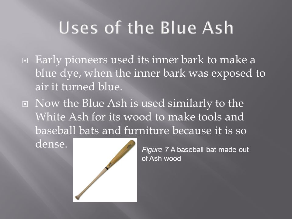  The most noticeable difference in the Blue Ash is that its twigs are very rectangular.