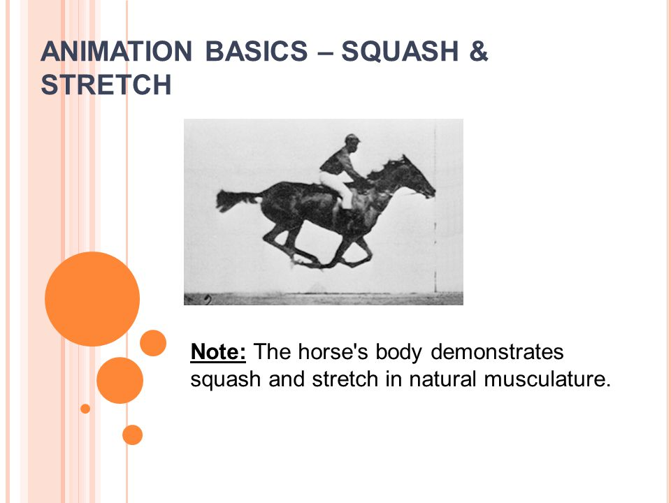 ANIMATION BASICS – SQUASH & STRETCH Note: The horse s body demonstrates squash and stretch in natural musculature.