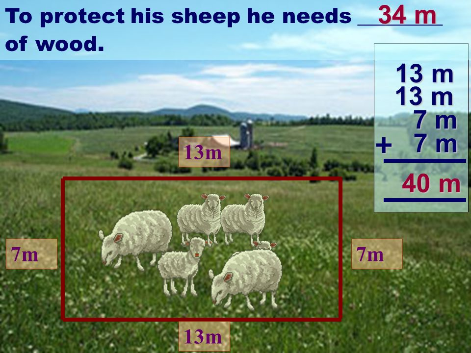 13m 7m 13m 7m Franco thought that it is better to build the fence for his sheep to protect them from the wolves.