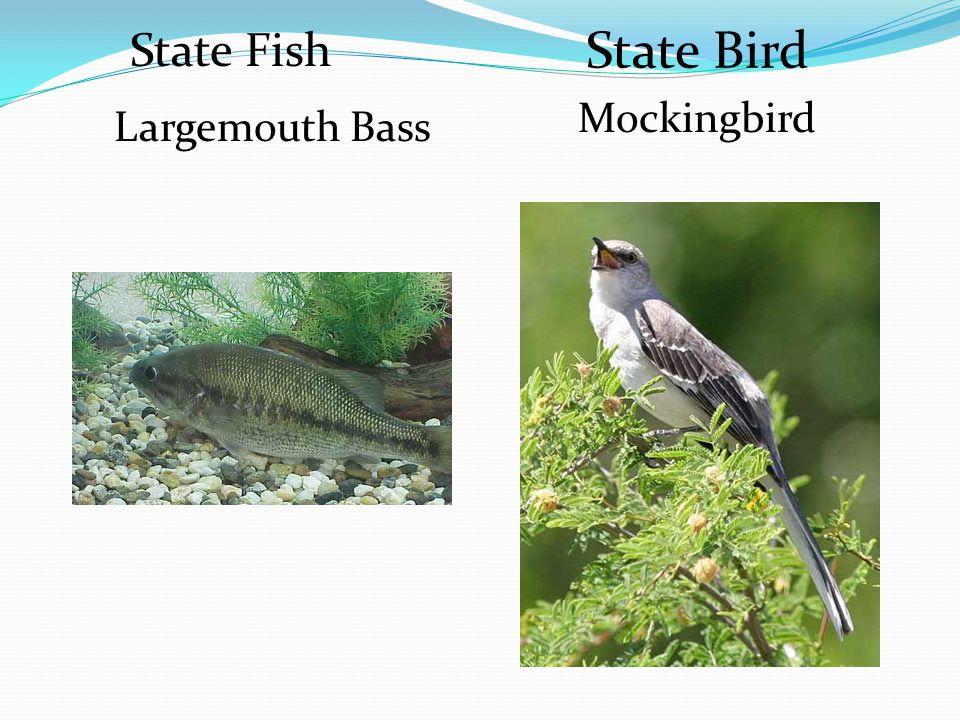 State Fish State Bird Largemouth Bass Mockingbird