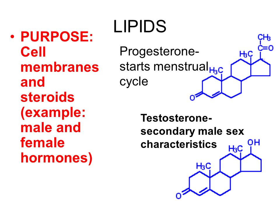LIPIDS PURPOSE: Cell membranes and steroids (example: male and female hormones) Progesterone- starts menstrual cycle Testosterone- secondary male sex characteristics