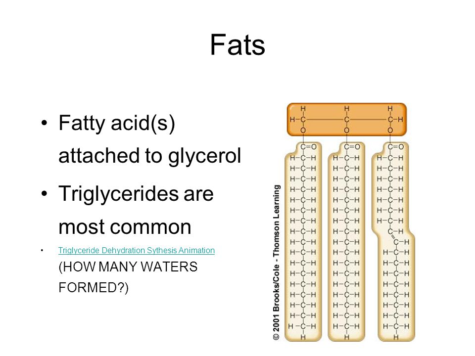 Fats Fatty acid(s) attached to glycerol Triglycerides are most common Triglyceride Dehydration Sythesis Animation (HOW MANY WATERS FORMED )Triglyceride Dehydration Sythesis Animation