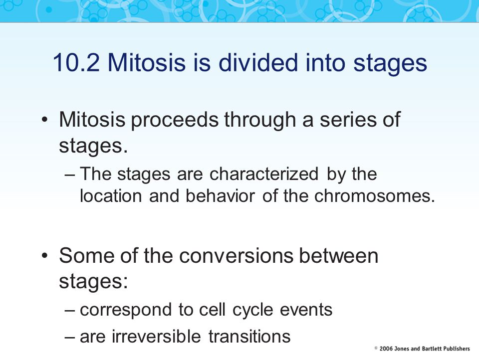 10.2 Mitosis is divided into stages Mitosis proceeds through a series of stages.