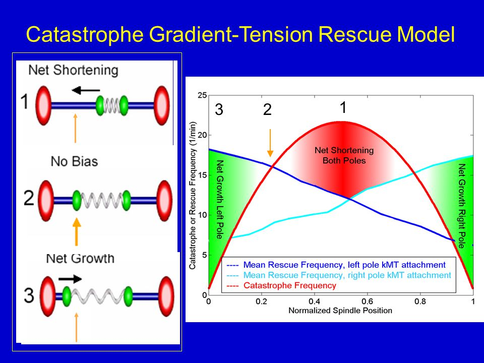 Catastrophe Gradient-Tension Rescue Model 1 32
