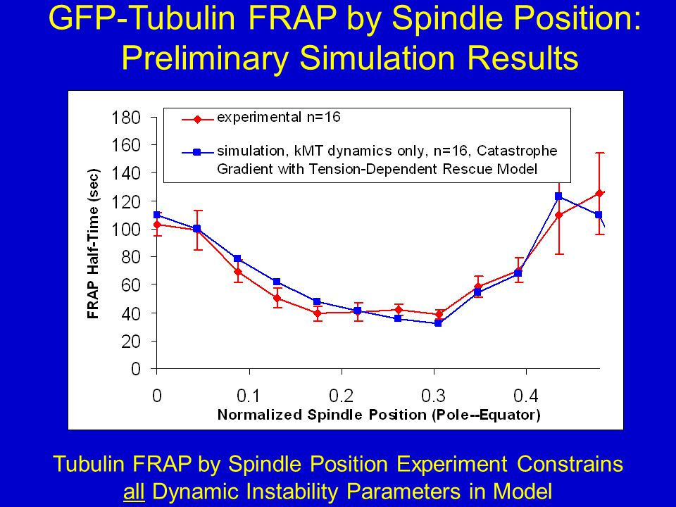 GFP-Tubulin FRAP by Spindle Position: Preliminary Simulation Results Tubulin FRAP by Spindle Position Experiment Constrains all Dynamic Instability Parameters in Model