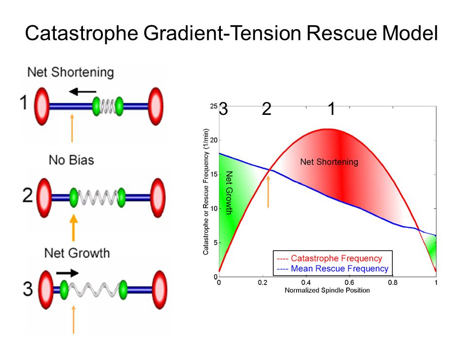 123 Catastrophe Gradient-Tension Rescue Model