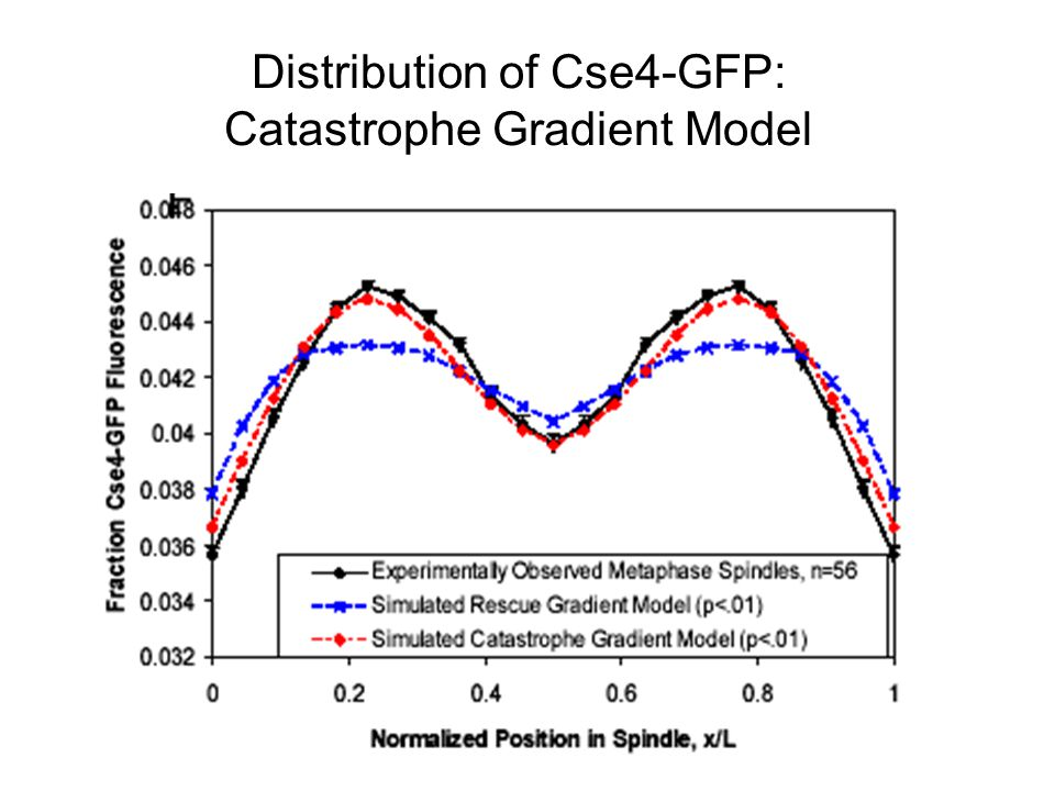 Distribution of Cse4-GFP: Catastrophe Gradient Model