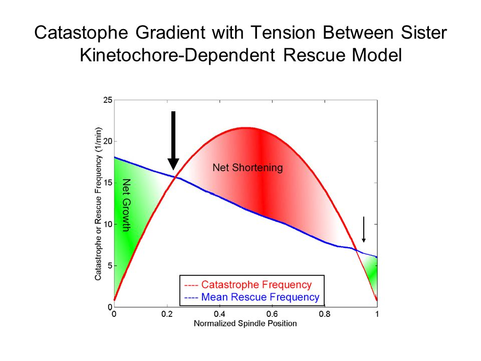 Catastophe Gradient with Tension Between Sister Kinetochore-Dependent Rescue Model