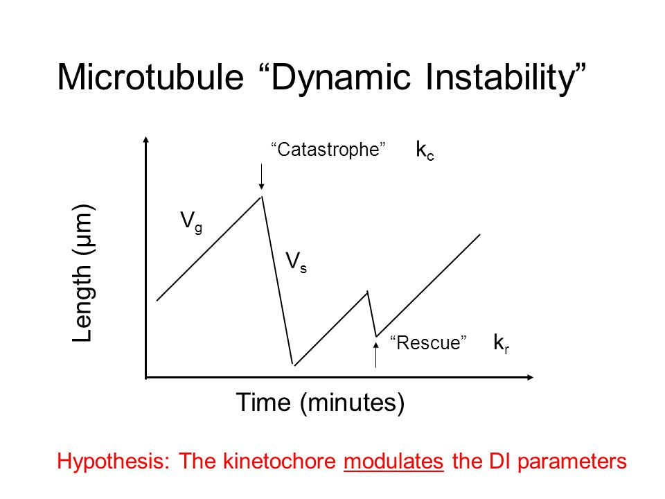 Microtubule Chemotaxis in a Chemical Gradient Immobile Kinase Mobile Phosphatase A: Phosphorylated Protein B: Dephosphorylated Protein k* Surface reaction B-->A k Homogeneous reaction A-->B Kinetochore Microtubules - + Immobile Kinase MT Destabilizer Position Concentration X=0 X=L