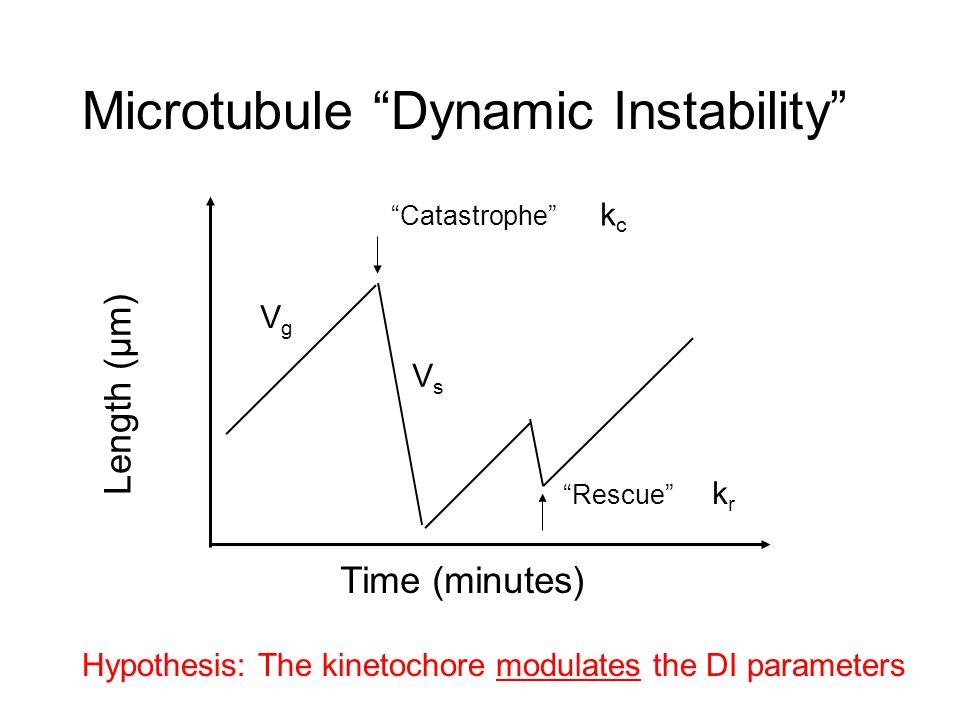 Distribution of Cse4-GFP: Catastrophe Gradient Model