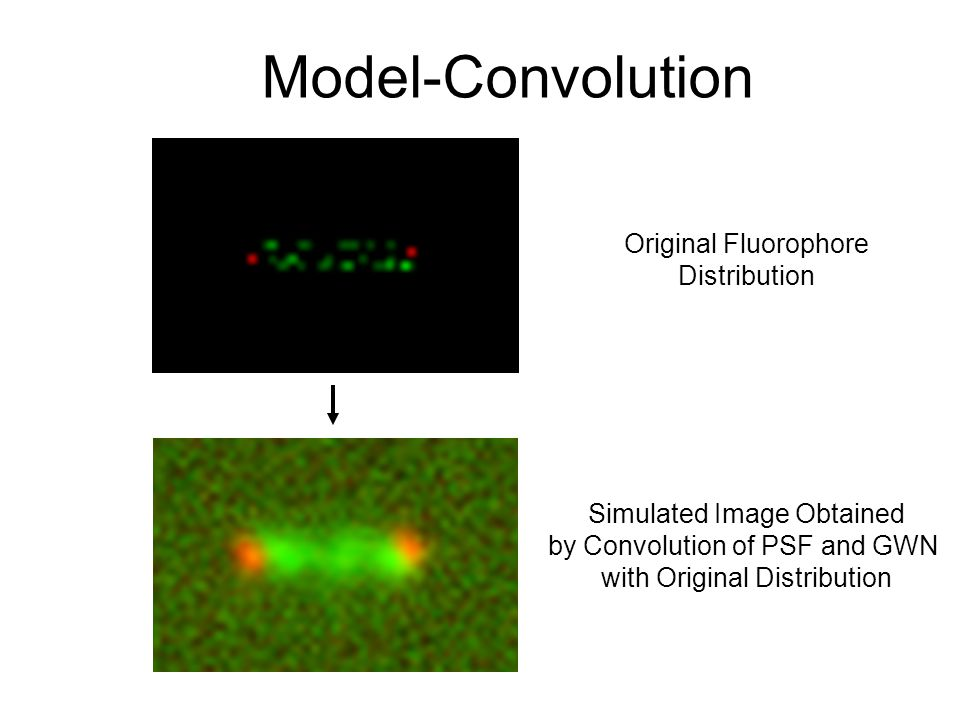 Simulated Image Obtained by Convolution of PSF and GWN with Original Distribution Original Fluorophore Distribution Model-Convolution