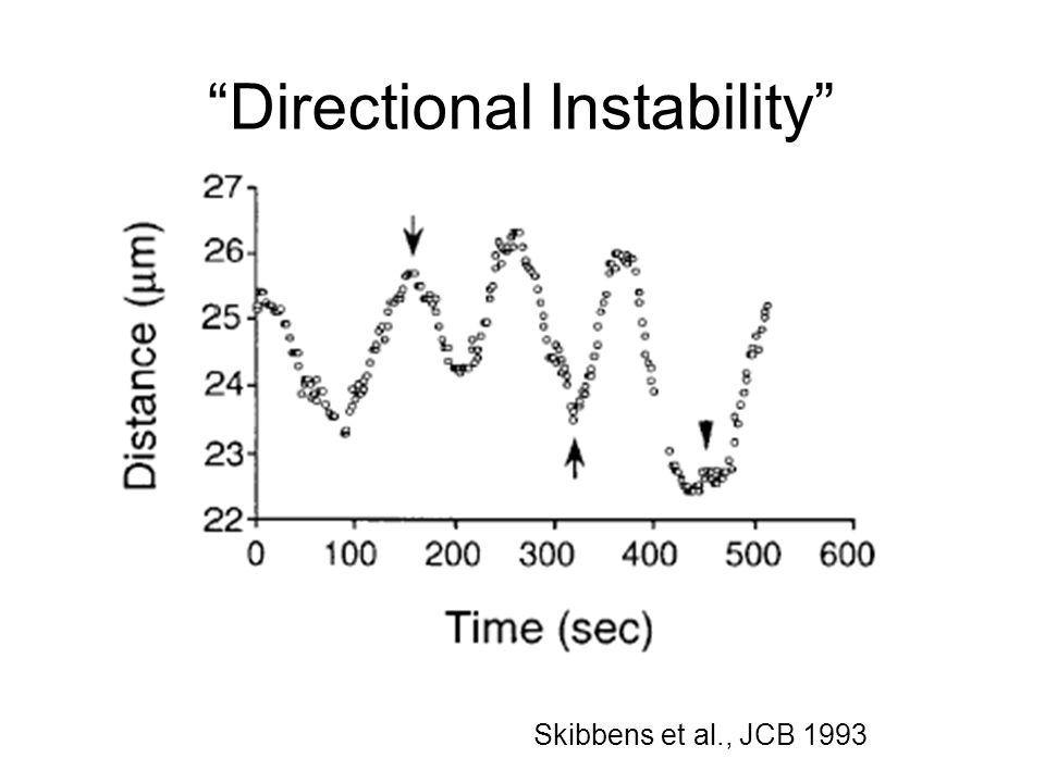 """""""Directional Instability"""" Skibbens et al., JCB 1993"""