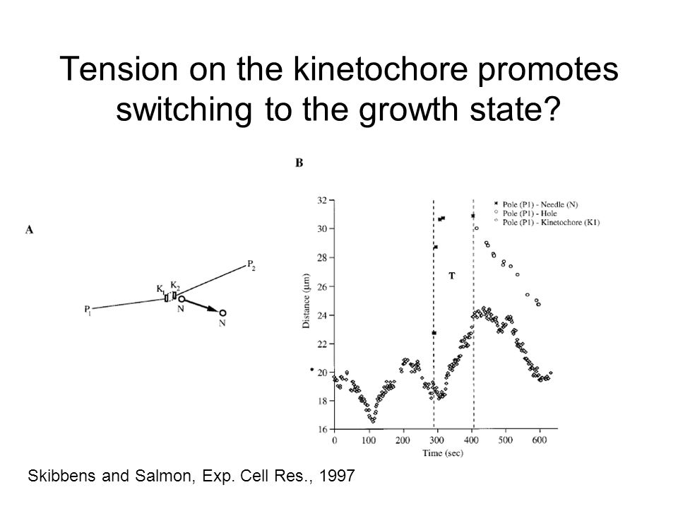 Tension on the kinetochore promotes switching to the growth state.