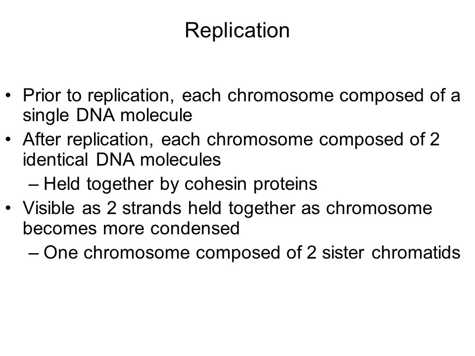 Replication Prior to replication, each chromosome composed of a single DNA molecule After replication, each chromosome composed of 2 identical DNA molecules –Held together by cohesin proteins Visible as 2 strands held together as chromosome becomes more condensed –One chromosome composed of 2 sister chromatids