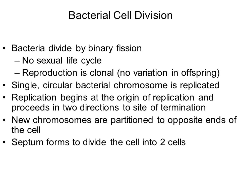 Bacterial Cell Division Bacteria divide by binary fission –No sexual life cycle –Reproduction is clonal (no variation in offspring) Single, circular b