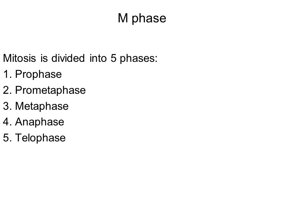 M phase Mitosis is divided into 5 phases: 1. Prophase 2. Prometaphase 3. Metaphase 4. Anaphase 5. Telophase