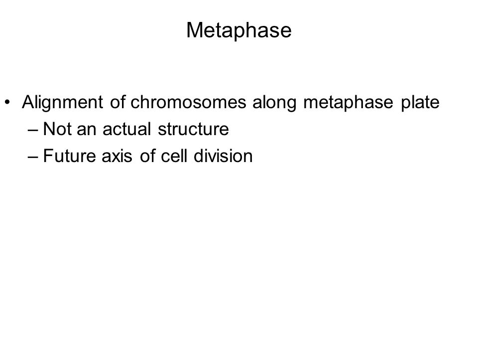 Metaphase Alignment of chromosomes along metaphase plate –Not an actual structure –Future axis of cell division