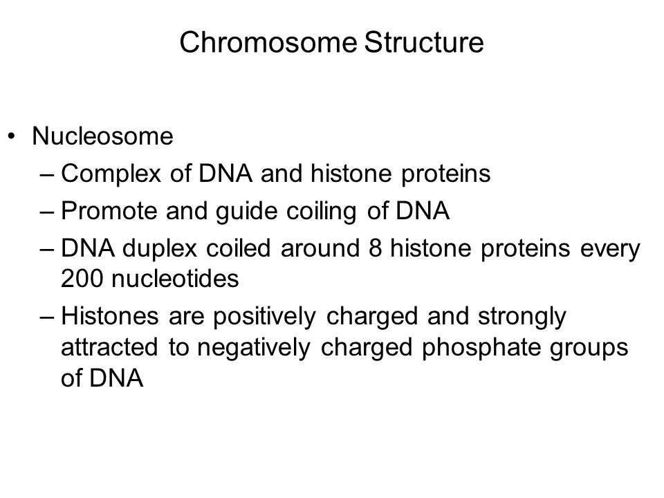 Chromosome Structure Nucleosome –Complex of DNA and histone proteins –Promote and guide coiling of DNA –DNA duplex coiled around 8 histone proteins every 200 nucleotides –Histones are positively charged and strongly attracted to negatively charged phosphate groups of DNA