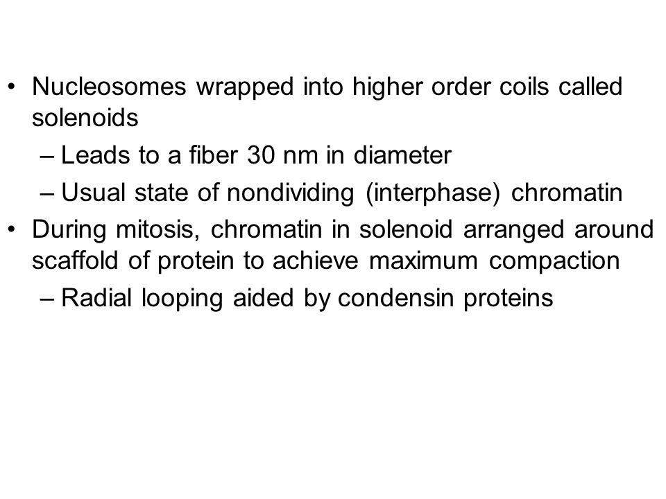 Nucleosomes wrapped into higher order coils called solenoids –Leads to a fiber 30 nm in diameter –Usual state of nondividing (interphase) chromatin During mitosis, chromatin in solenoid arranged around scaffold of protein to achieve maximum compaction –Radial looping aided by condensin proteins