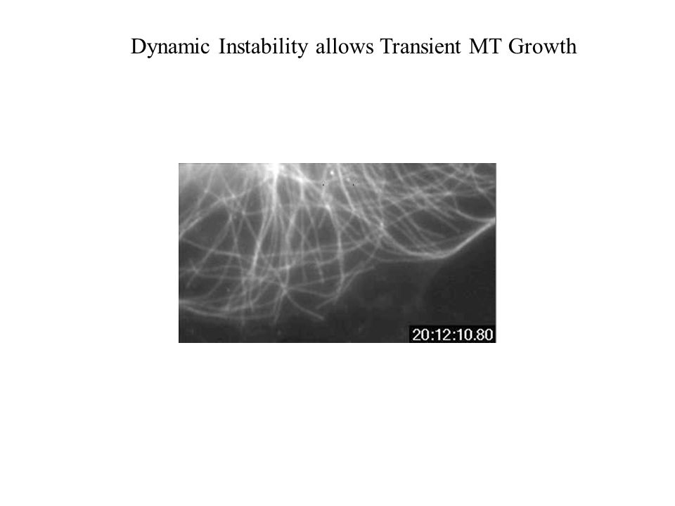 Dynamic Instability allows Transient MT Growth
