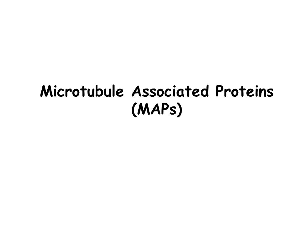 Microtubule Associated Proteins (MAPs)