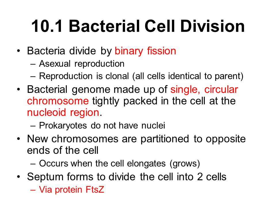 10.1 Bacterial Cell Division Bacteria divide by binary fission –Asexual reproduction –Reproduction is clonal (all cells identical to parent) Bacterial