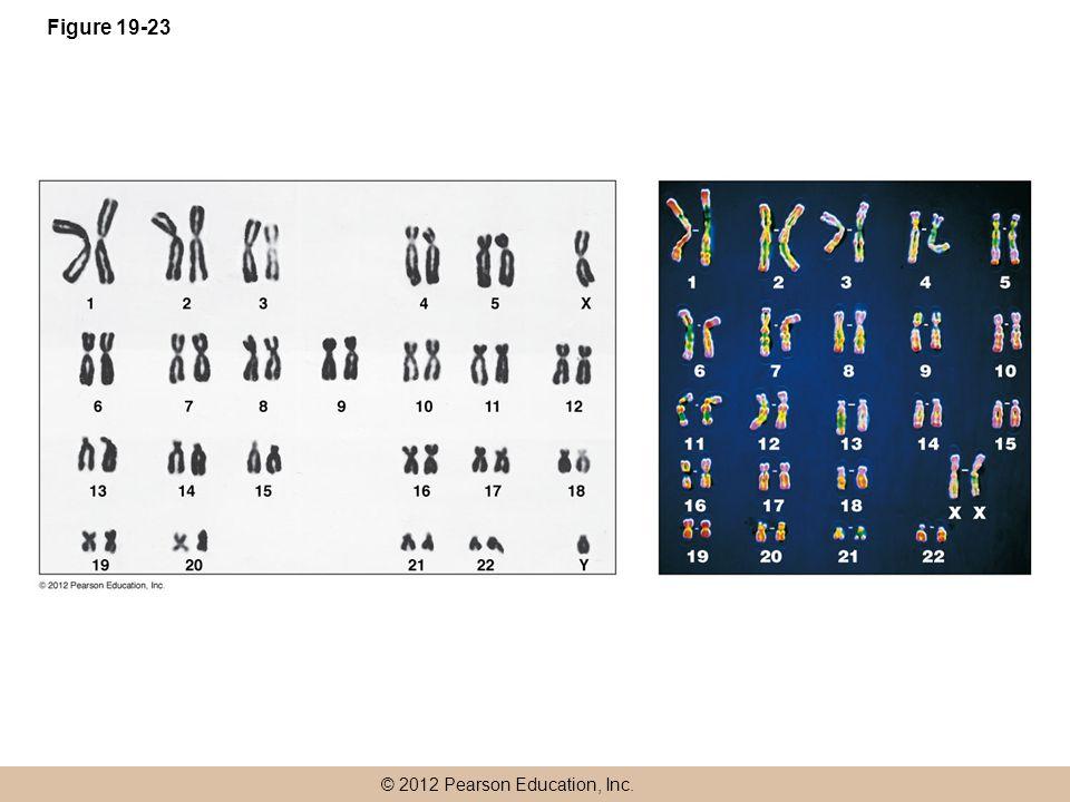 © 2012 Pearson Education, Inc. Figure 19-23