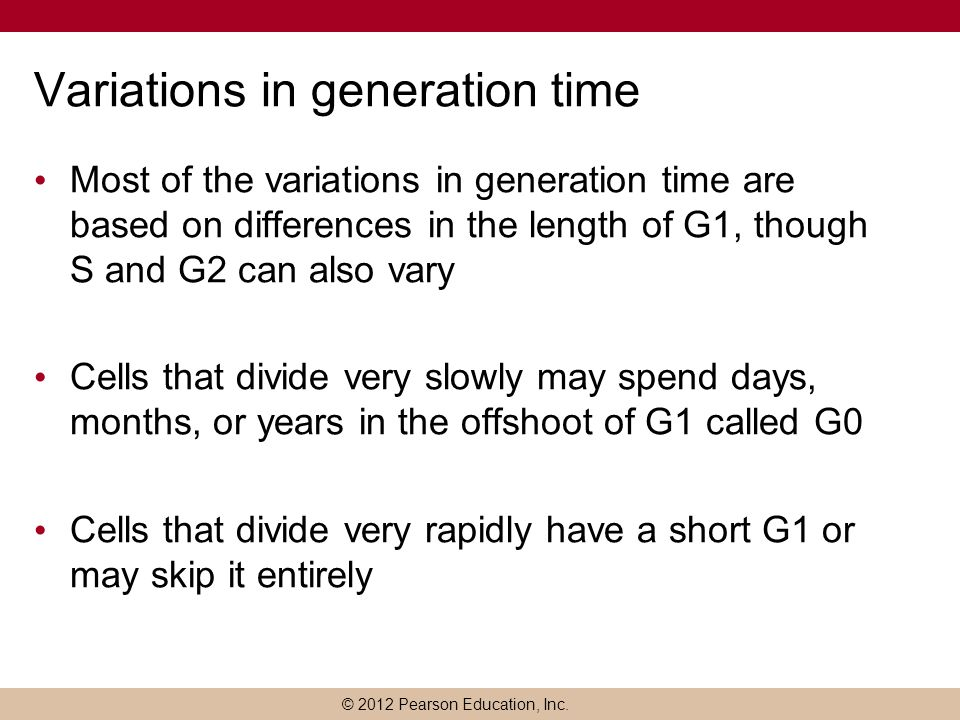 © 2012 Pearson Education, Inc. Variations in generation time Most of the variations in generation time are based on differences in the length of G1, t