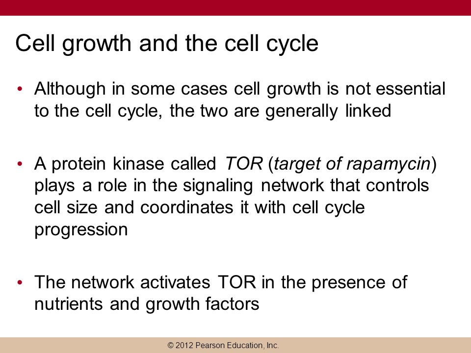 © 2012 Pearson Education, Inc. Cell growth and the cell cycle Although in some cases cell growth is not essential to the cell cycle, the two are gener