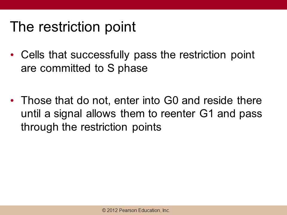 © 2012 Pearson Education, Inc. The restriction point Cells that successfully pass the restriction point are committed to S phase Those that do not, en