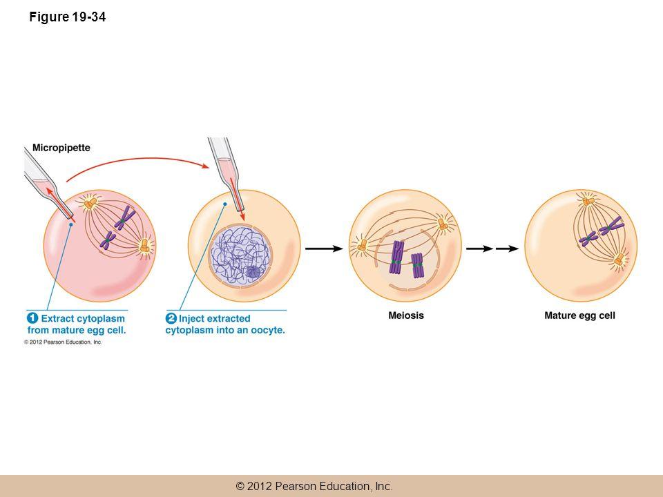 © 2012 Pearson Education, Inc. Figure 19-34