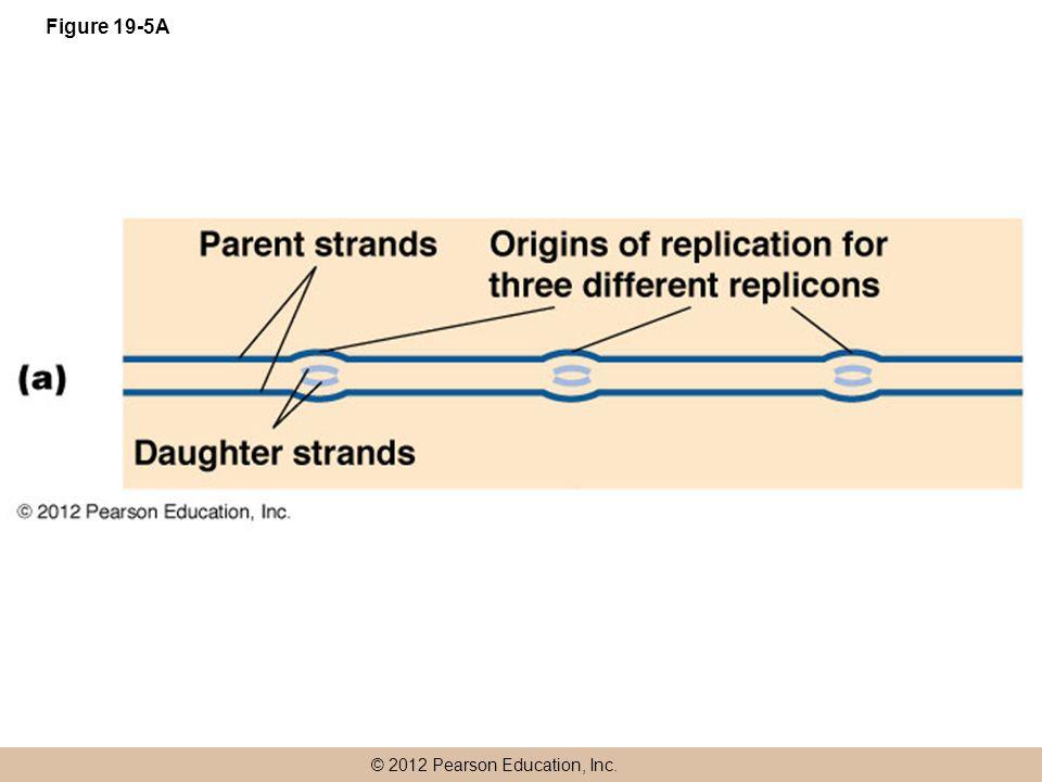 © 2012 Pearson Education, Inc. Figure 19-5A