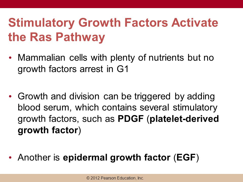 © 2012 Pearson Education, Inc. Stimulatory Growth Factors Activate the Ras Pathway Mammalian cells with plenty of nutrients but no growth factors arre
