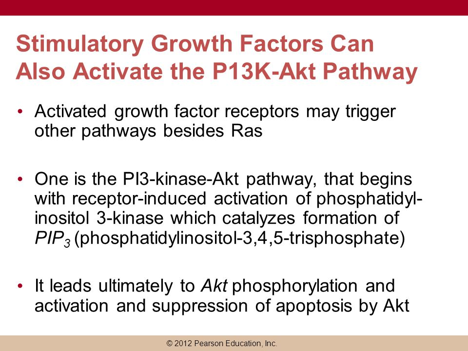 © 2012 Pearson Education, Inc. Stimulatory Growth Factors Can Also Activate the P13K-Akt Pathway Activated growth factor receptors may trigger other p