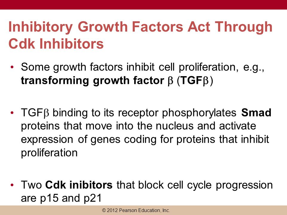 © 2012 Pearson Education, Inc. Inhibitory Growth Factors Act Through Cdk Inhibitors Some growth factors inhibit cell proliferation, e.g., transforming