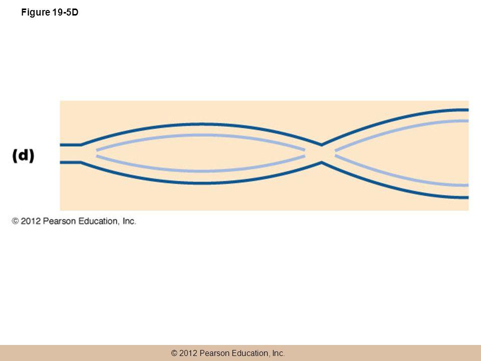 © 2012 Pearson Education, Inc. Figure 19-5D