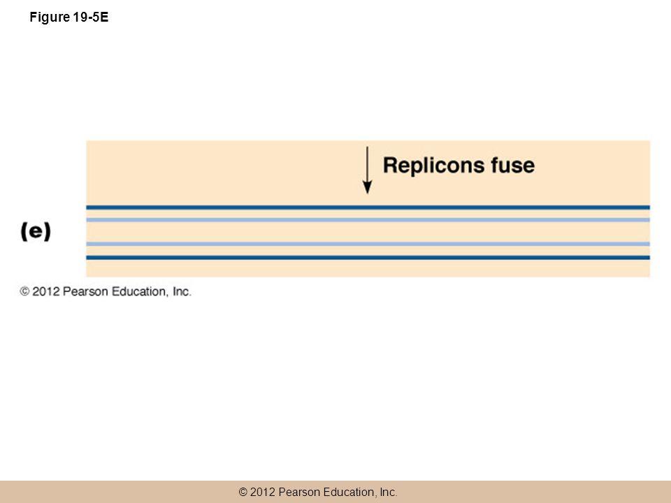 © 2012 Pearson Education, Inc. Figure 19-5E